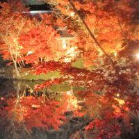 京都の紅葉(my 2017.11)