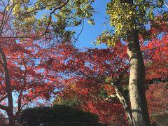 北鎌倉から鎌倉駅へ 紅葉ハイキング