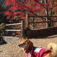 ワンコと旅行♪昇仙峡の紅葉と八ヶ岳の自然に癒されて…!【後編】