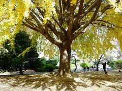 秋晴れの東京国立博物館 庭園散策<運慶展・最終日>
