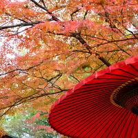京都の紅葉 松花堂から善法律寺、そして光明院へ!2017年