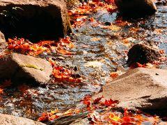 ぷらっと旅、紅葉を見に昭和記念公園へ