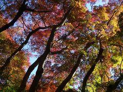 三浦半島2DAYきっぷを利用して鎌倉から城ケ崎へ