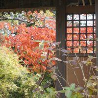 【鎌倉散歩】問題は カメラでなくて 腕、センス