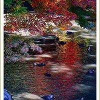 Solitary Journey [1935] 江戸時代のおもかげを伝える日本三名園のひとつ後楽園で紅葉観賞<岡山後楽園・岡山城&福山城>広島県福山市