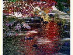 Solitary Journey[1935]江戸時代の面影を伝える日本三名園のひとつ後楽園の紅葉♪<岡山後楽園・岡山城&福山城>広島県福山市