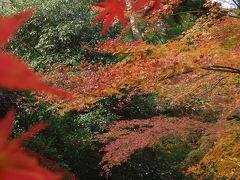 新那智山今熊野観音寺。京都紅葉めぐりの隠れた名所。静かで落ちついたところです。