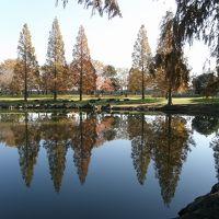 メタセコイヤの紅葉が素晴らしい加須はなさき公園を訪れる・・・②メタセコイヤの並木に負けない園内の紅葉・黄葉