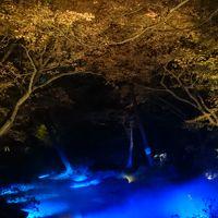 【再訪】紅葉が見頃で、もみじと大名庭園がライトアップの六義園をお散歩 *:゜☆ヽ(*'∀'*)/☆゜:。*。