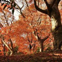 紅葉が見ごろの須磨離宮公園