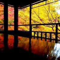 紅葉狩りをしに京都に日帰り旅しました。
