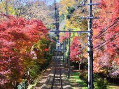 [秋の休日]紅葉まっさかりの高尾山でプチ・ハイキング