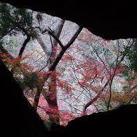 紅葉の山を訪ねて♪ 奥三河岩古谷山と鳴沢の滝♪