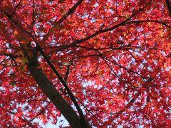 2017秋、奈良の名城巡り(3/12):11月16日(3):高取城(3/6):高取城、多門櫓跡、本丸跡、楓の紅葉