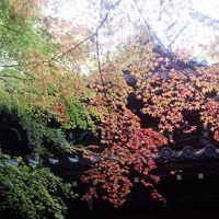 17年11月どこかにマイルで伊丹へ(1) 京都 東山区付近編