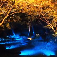 紅葉と大名庭園のライトアップ ★六義園★