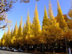 神宮外苑のイチョウ並木と国会議事堂前のイチョウ並木、皇居東御苑の紅葉