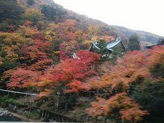 思いのほか紅葉が楽しめた箱根1泊旅行!!