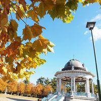 美しい紅葉を見に鶴舞公園へ 「SURIPU」のパン&「WitCAFE」でワインランチ 桜山駅グルメ フィナンシェリーアッシュのフィナンシェとブレヴァンのパン ステーキのあさくまディナー
