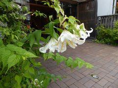 夏の軽井沢バカンス♪ Vol15 ☆軽井沢:旧軽井沢で優雅なショッピング♪