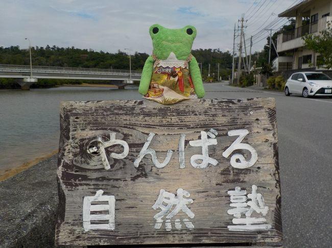 沖縄北部やんばる 命ぐすいの旅 4