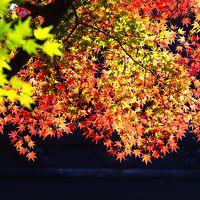 おとぎの国のようだった鎌倉の獅子舞と訪れる人が少ない妙心寺の紅葉