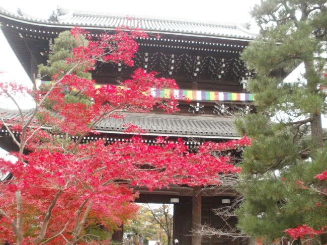 久しぶりに1泊2日のバス旅行でした 光明寺から神戸クルージング 六甲山で神戸の1000万ドルの夜景を見ながら夕食<br />二日目は 東福寺・下神神社・南禅寺の紅葉巡りをしました・・