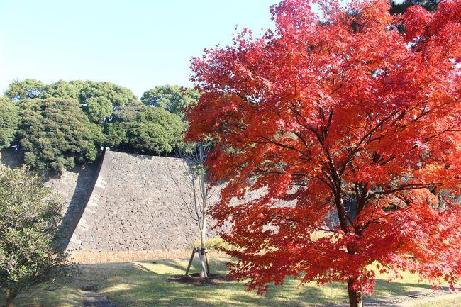 今日は皇居内部の一般公開があったので行ってみました。 <br /><br />日本中のお城や世界中の宮殿を回っているのに、皇居はあまり来たことがないなあ。<br />小学生のときに「正月一般参賀」に行って、当時の昭和天皇を遠くから見たくらいかも。<br /><br />天気もよく、紅葉も見ごろで、多くの人が来ていました。