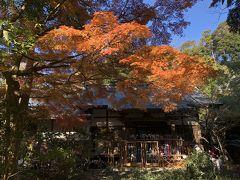 紅葉真っ盛りの円覚寺を訪ねて