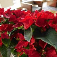 横浜で同窓会☆「横浜ロイヤルパークホテル」宿泊と紅葉の鎌倉散歩♪