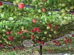 紅葉の恵庭渓谷と世界一大きなトマトの木 2017(北海道)