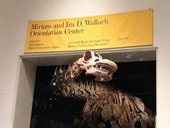 ニューヨーク6日間の旅 5 ☆ナイトミュージアムの舞台となったアメリカ自然史博物館とタイムズスクエア、ミュージカル「キンキーブーツ」☆