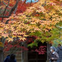 秋の九品仏・浄真寺 2017