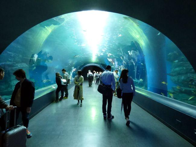 せっかく品川プリンスに泊まるので、午後はホテルの水族館を楽しもうと、エプソン品川アクアパークを訪ねます。<br /><br />リニューアル後初めて訪ねる水族館は、お洒落にスタイリッシュに生まれ変わっていました。<br />
