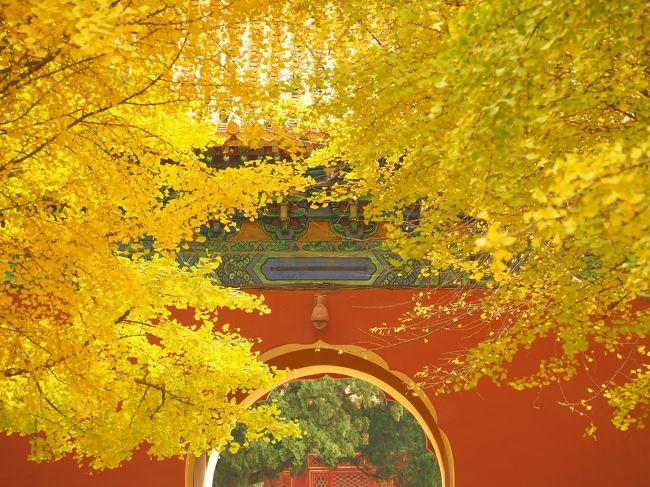 せっかくなら現在住んでる北京の紅葉を楽しもう!といくつかの紅葉スポットへ。<br /><br />北京市内は銀杏がメイン。<br />延々と続く銀杏並木もあれば、古い建築物とのコントラストが美しい銀杏も。<br /><br />今年は『地壇公園』『円明園』『中山公園』の銀杏を満喫しました。<br />