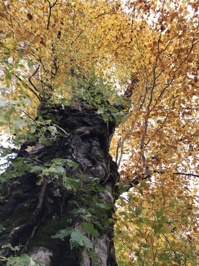 9月下旬の涸沢カールから始まり、関東最後の紅葉・千葉県市原市の紅葉まで、2017年の秋の景色を振り返る。なので、エリアは長野だけでなく、秋田、福島、茨城、千葉と紅葉を追っていろいろ。竹内マリアさんの「人生の扉」の歌のように「満開の桜や、色づく山の紅葉を この先いったい何度 見ることになるだろ」と思うと、どんな小さな紅葉も見逃してはいけないという気持ちになる。木々の競演を撮りまくった。その中から何枚かの写真を選ぶのは難しいけれど、2017年の紅葉をふりかえってみよう。