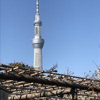 亀戸天神社で七五三