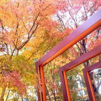 東京都心の紅葉はまだまだ捨てたもんじゃなかった!〜文楽鑑賞で国立劇場へ向かう道すがら