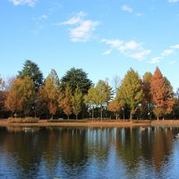 彩の森入間公園  秋のちょこっと散歩