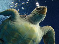 紅葉とクラゲに会いに秋の東北へ (6)癒しの空間 加茂水族館
