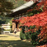 紅葉を楽しもう!京都・和歌山withワンコ旅 �