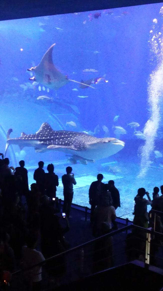 1日目:沖縄到着<br />2日目:レンタカーにて美ら海水族館、万座毛<br />3日目:首里城<br />
