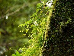 台風接近でも・・・和やかな気持ちになれます飫肥城 & 雨 風 道連れ 鵜戸神社