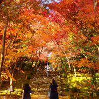 嵐山の下流でひっそりと色づいた紅葉~浄住寺の静かに賑わう秋~