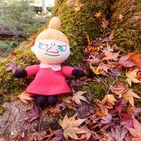 紅葉を求めて養老渓谷へ。