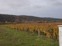 トリュフとワインを愉しむイストラ半島 その3 ワイナリーで試飲、その後トリュフ祭りとトリュフの収穫見学、トリュフの食事を味わう