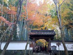 紅葉の苔寺、鈴虫寺、地蔵院へ