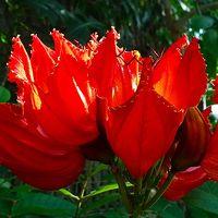 鶴見緑地 咲くやこの花館 上巻。
