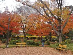 東京日比谷周辺の紅葉