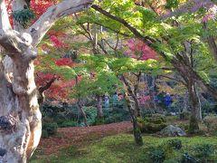 京都紅葉お寺めぐり